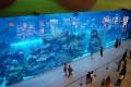 Dubai Aquarium, Dubai