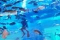 Dubai Aquarium, feeding time, Dubai